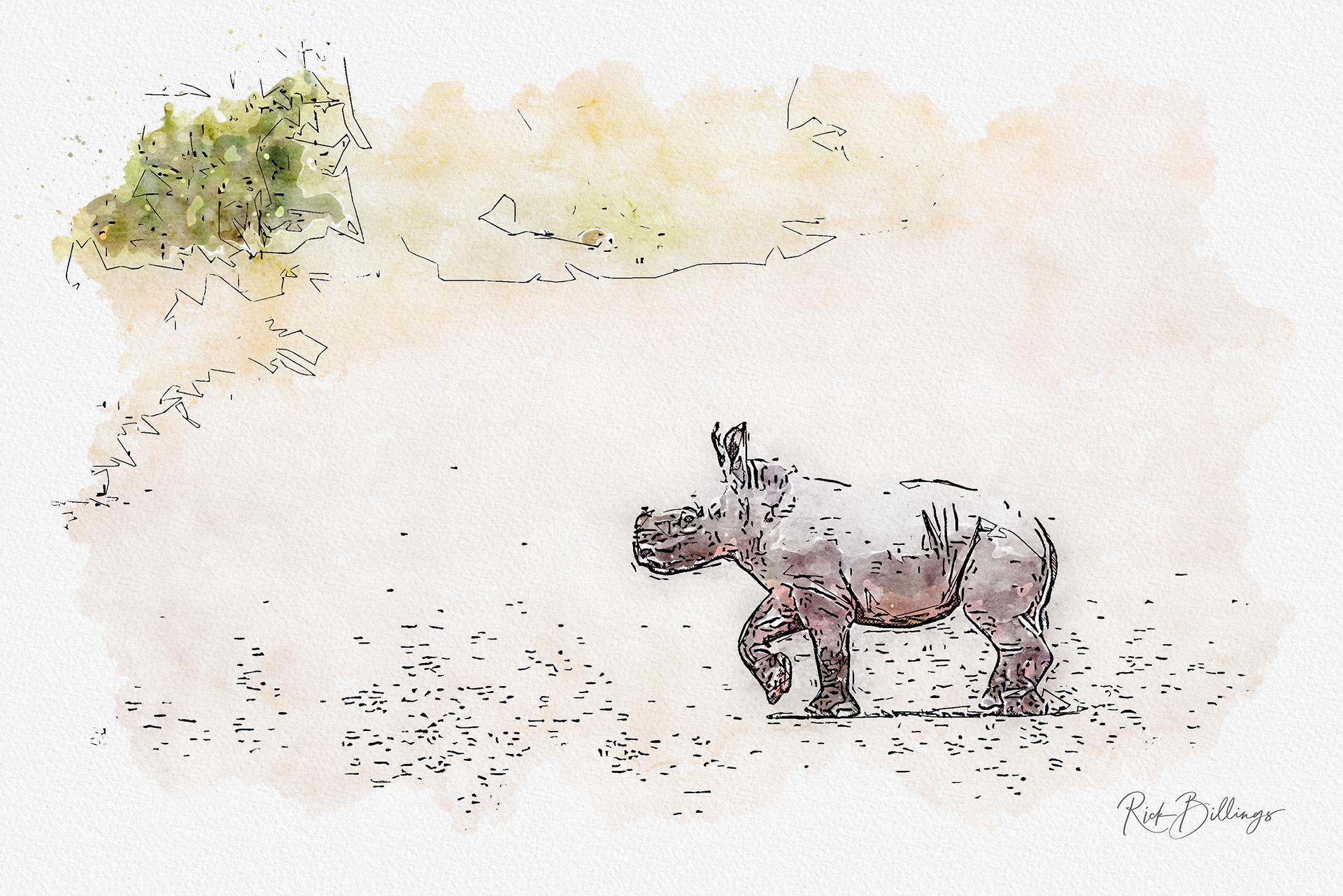 No 1148 2019 Baby Rhino